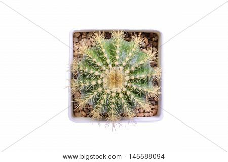 top view  of cactus flower white background isolate with clipping path for decorate design