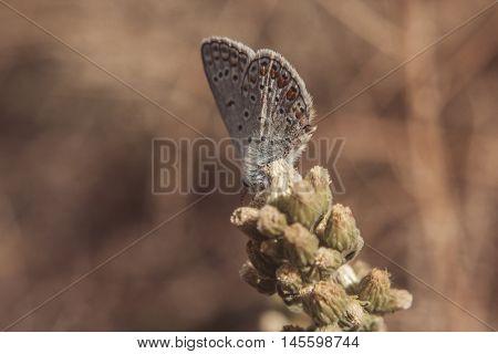 Butterfly in a field. Guastalla (RE) - 22/09/2015