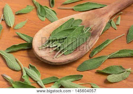 Salvia. Commo Garden sage over a wooden table