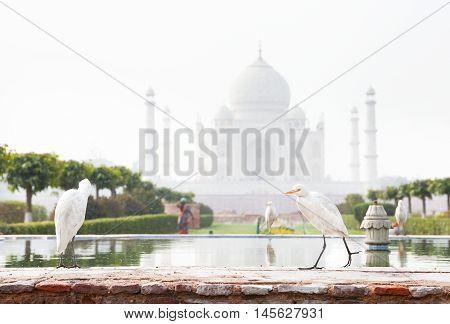 Birds Near Taj Mahal