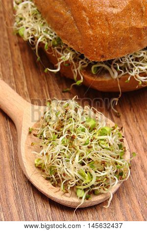 Alfalfa And Radish Sprouts On Spoon And Wholemeal Bread Roll
