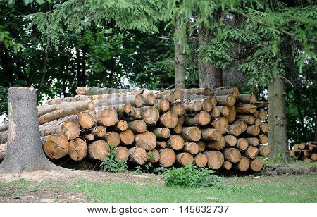 Pile Of Pine Tree Logs