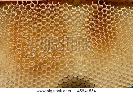 Fragment of honeycomb with full cells