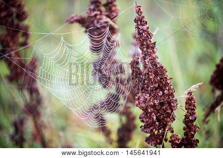 Spiderweb,  Spider's Web