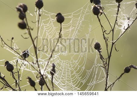 The spider web cobweb in the meadow