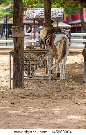 Pony In Farm Or Livestock
