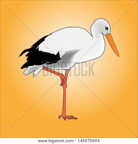 A beautiful white stork. Bird on one leg