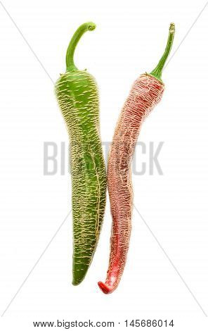 Organic Macedonian Fringed Hot Chili Peppers With Green Stem.