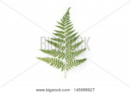 fern branch isolated on white background. flat lay top view