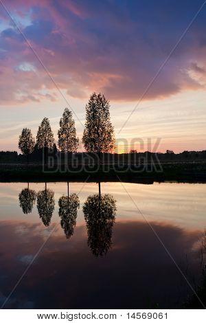 Árvore sem folhas, perto do Lago sobre o sol