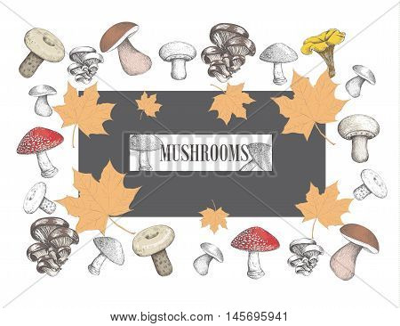 Mushroom billboard. Signboard autumn mushrooms. Yellow leaves. Mushroom set. Vector illustration for your design