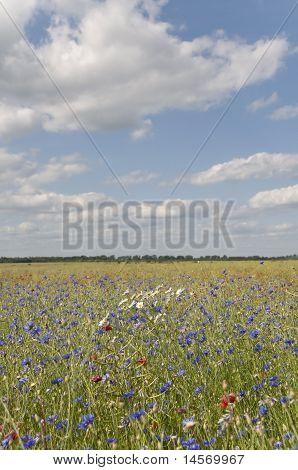 Flowers fields