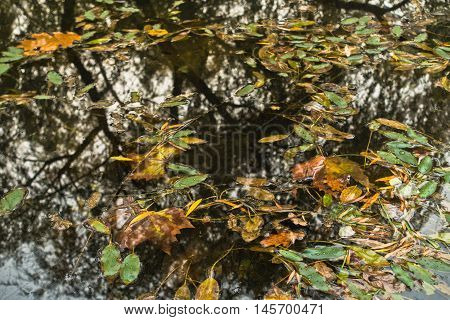 Fallen leaves and reflection of trees in a small lake at autumn