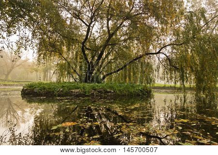 Tree with fallen leaves in a small lake, autumn in Topcider park, Belgrade, Serbia