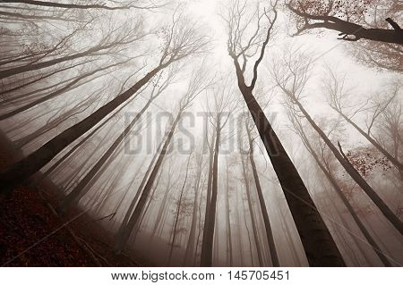 Foggy forest in the autumn, low angle view