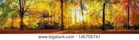 Panorama of a stunning forest scenery in autumn a scenic landscape with pleasant warm sunshine