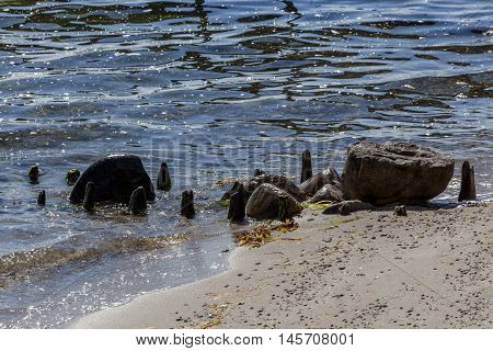 Rocks and old wooden jetty remains in sea water