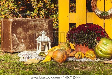 Autumn harvest festival - basket with autumn fruits, old suitcase, pumpkins and colorful autumn flowers. Landscape design in the country style for fall season.