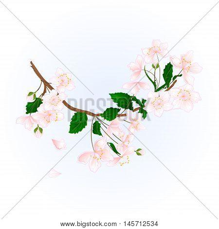Branch wild Cherry natural background vector illustration