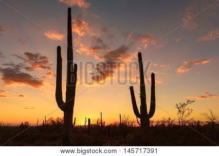 Sunset in Arizona desert, with Saguaro silhouette.
