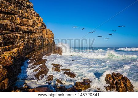 Powerful ocean surf in the Atlantic Ocean. The Cape of Good Hope - the most extreme southwest point of Africa. Pack of migratory birds at sunset. The concept of active tourism