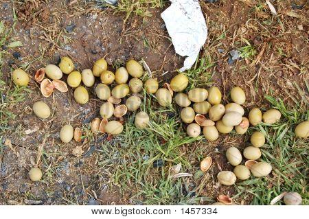 Olive After Picnic