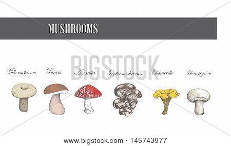 Mushrooms vector illustration Mushrooms  Mushrooms  Mushrooms  Mushrooms  Mushrooms  Mushrooms  Mushrooms