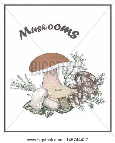 Mushrooms vector illustration Mushrooms vector illustration Mushrooms