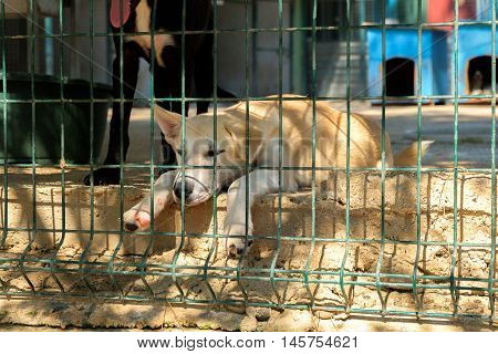 Sad white homeless dog in a big cage