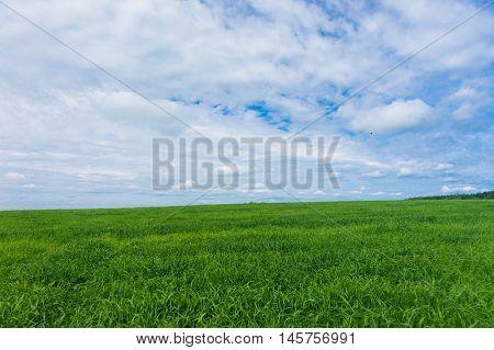 Fresh Landscape Field Freedom