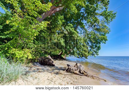 Coast of the Puck Bay, Baltic Sea in Poland. Trees hanging over the water.