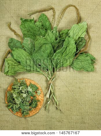 Plantain. Dried herbs for use in alternative medicine spa herbal cosmetics herbal medicine preparing infusions decoctions tinctures powders ointments butter tea bath.