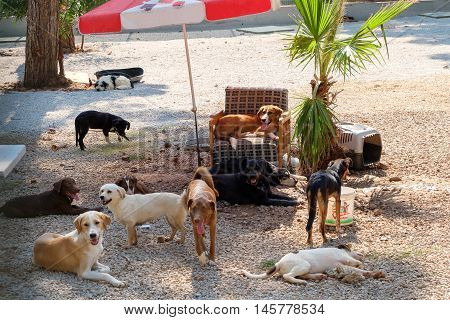 A group of homeless dogs in a big shelter
