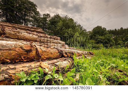 Stacked pine logs on a meadow. Moravian landscape Okrouhla.