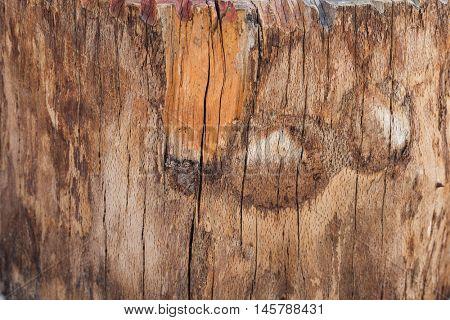 tree stump background texture closeup