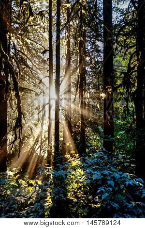 Sunbeams through trees. Cascade Mountains in Washington state near Seattle. USA.