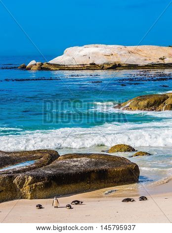 Boulders Penguin Colony. Huge boulders and black-white penguins on the beach of Atlantic Ocean. The concept of ecotourism