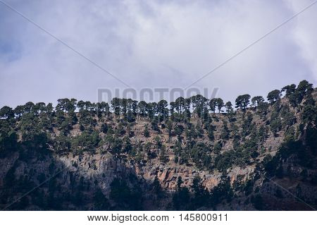 Landscape With Pine Forests And Mountains