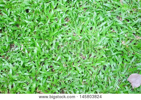 Background and texture of Beautiful green grass pattern