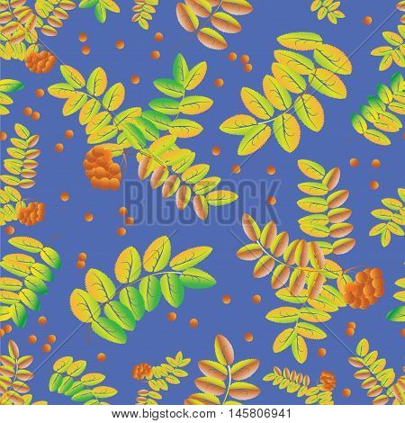 Bunches of berries and leaves of a Rowan on a background of blue sky. Seamless pattern of leaves and ripe berries of mountain ash. Use for the decoration of fabrics,  glassware.