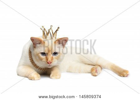 Sad Mekong Bobtail King Cat with Blue eyes and Crown on Head, Lying, Isolated White Background, Color-point Fur