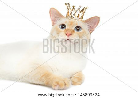 Close-up Fantastic Breed Mekong Bobtail King Cat with Blue eyes and Crown on Head, Lying, Isolated White Background, Color-point Fur