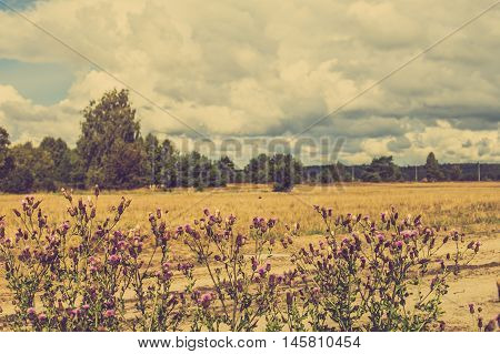 Photo of thistle in rural scene of grassland and forest in autumn, landscape, Poland