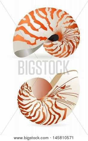 Vector 3D Realistic Nautilus Shell Rendering isolated on white background