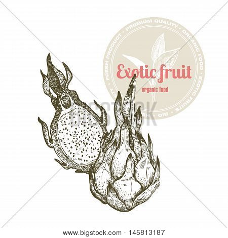 Vector image of exotic fruit dragonfruit isolated on white background. Illustration vintage style engraving. White and black.