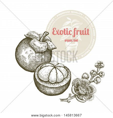 Vector image of exotic fruit mangosteen isolated on white background. Illustration vintage style engraving. White and black.