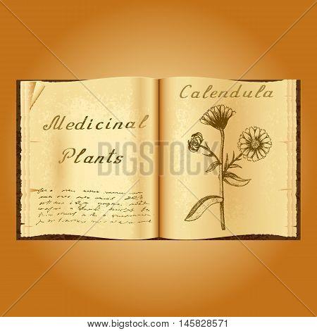 Calendula. Botanical illustration. Medical plants. Old open book herbalist. Grunge background. Vector illustration