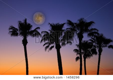 Tropical Sunset With Full Moon
