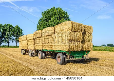Agricultural trailers fully loaded with straw bales in a wheat stubble field ready for transport to the farm. It's a sunny day in the summer season.