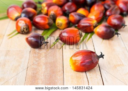 Commercial Palm Oil Cultivation. Since Palm Oil Contains More Saturated Fats  Its Use In Food. Oil F